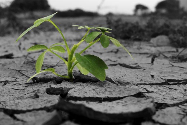 写真:乾燥地面